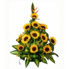 AG25 Tropical Flowers